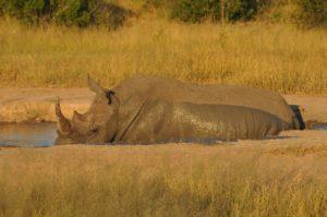 Rhino DSC_1699