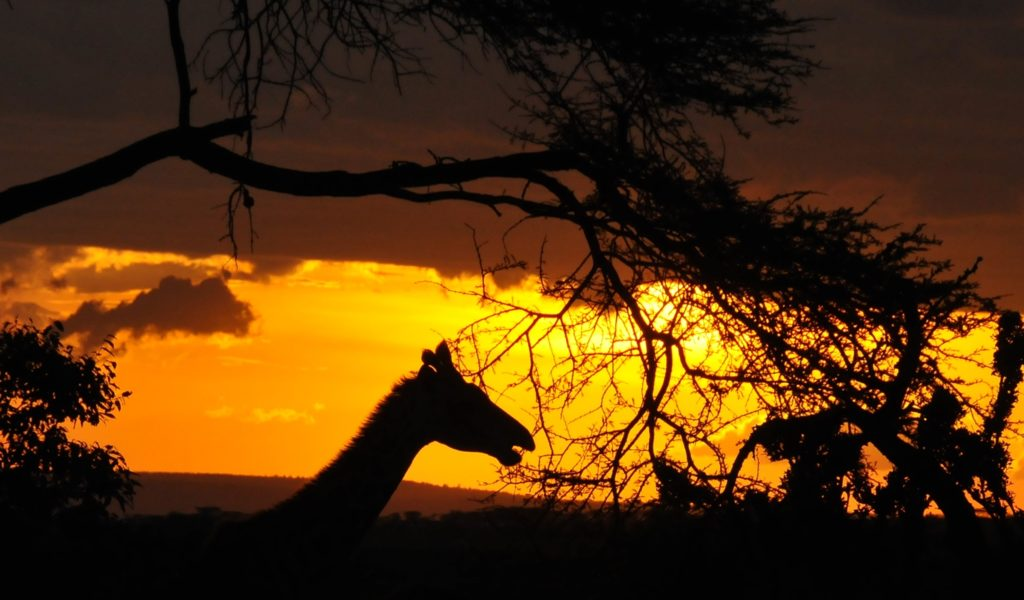 Sunset DSC_8682