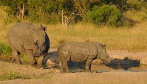 Rhino DSC_1693