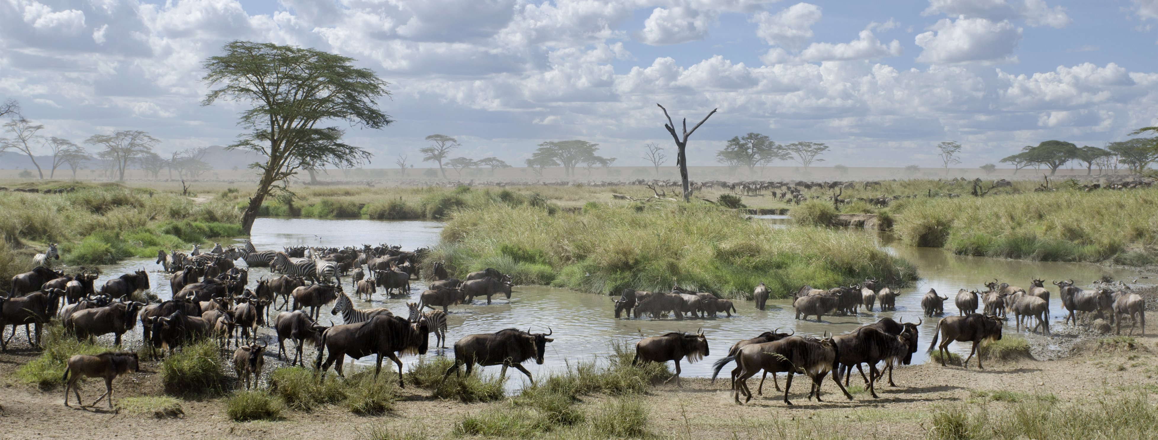 The Great Migration – everything you need to know about calving in the southern Serengeti, Tanzania