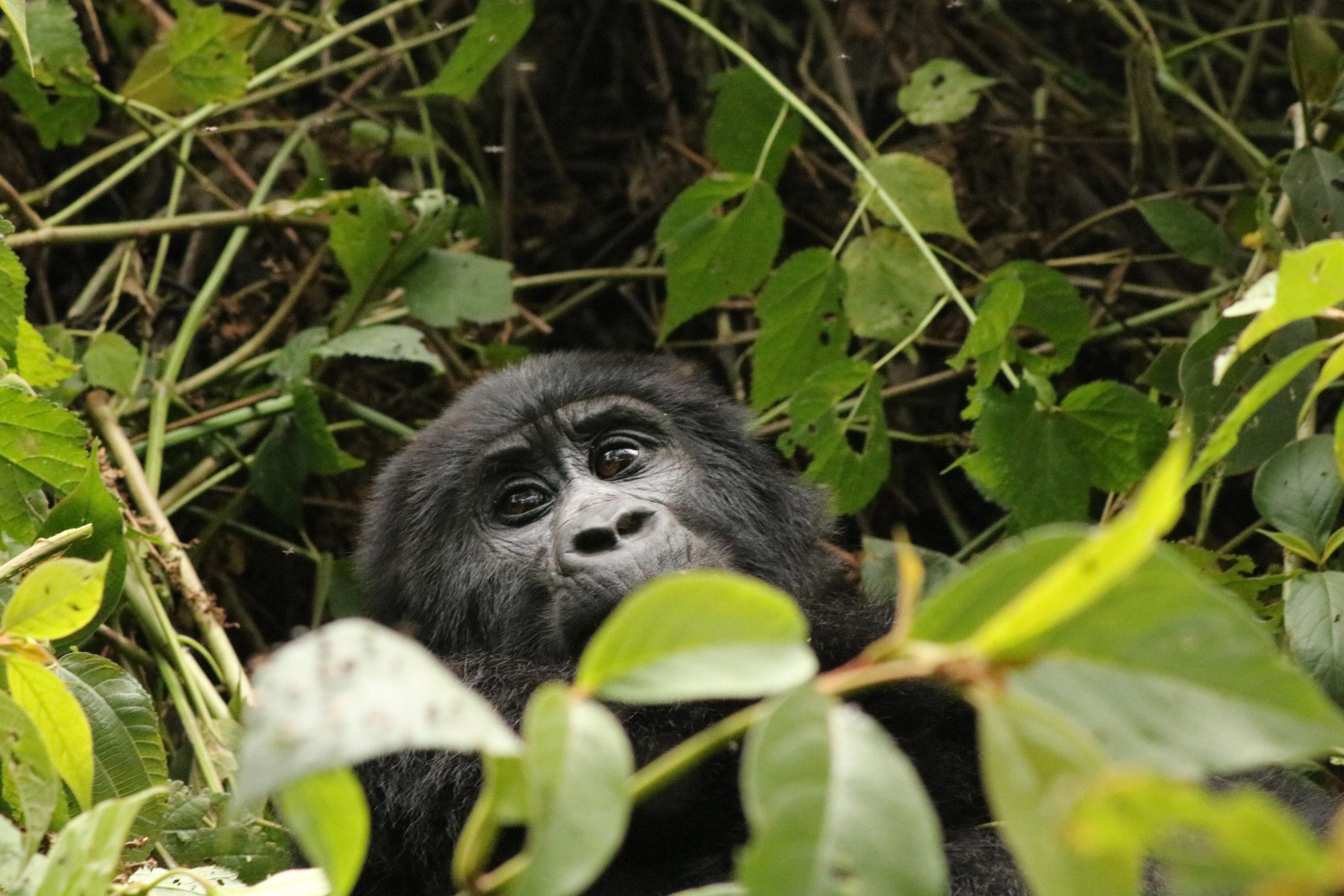 Photos: Gorilla Trekking in Bwindi National Park, Uganda
